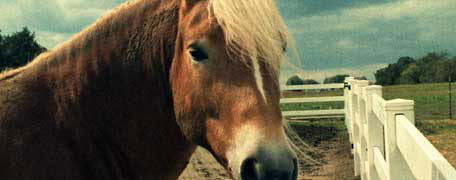 Hurricane Tips for Horse Owners